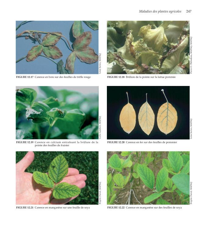 Plantes agricoles et leurs maladies les ccdmd for Site de plante
