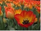Qui dit printemps, dit nouveautés au CCDMD!